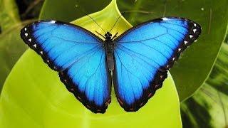 The Butterfly Farm in St Maarten