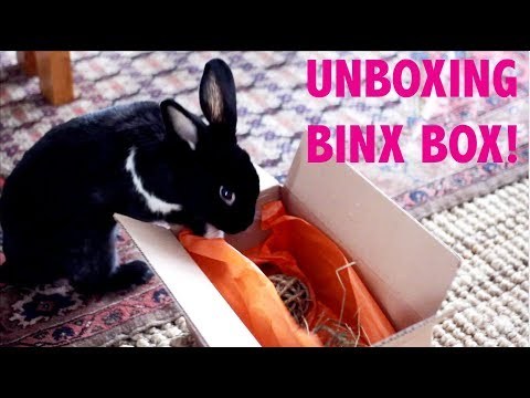 UNBOXING BINXBOX FOR RABBITS!