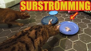 Cats vs. Surströmming - Eating Challenge!