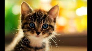 Смешные Милые Котики Котята & Кошечки | МурКотики 1