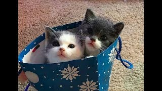 Funny Cute Cat and Kitten Videos - Kittens Playing and Meowing #2