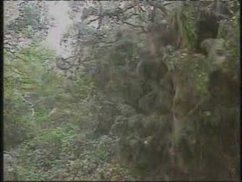 A giant spider web spanning 200 yards - YouTube
