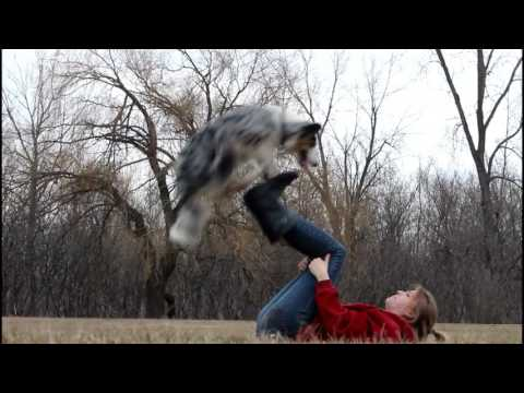 Three Australian Shepherd & AMAZING dog tricks