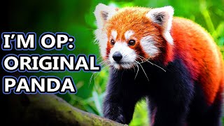 Red Panda | Animal Fact Files
