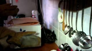 Неадекватная кошка.MP4