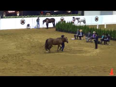 barrel racing cowgirls - 93rd Falkland Stampede 2011 from YouTube · Duration:  3 minutes 32 seconds  · 773.000+ views · uploaded on 23.05.2011 · uploaded by JCVdude
