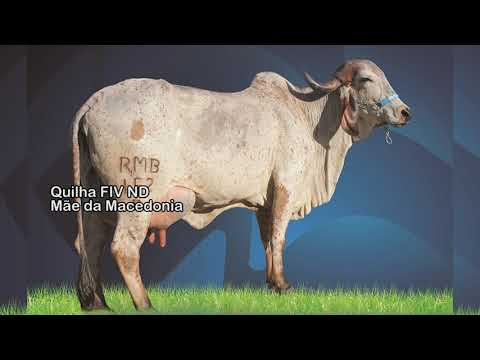 LOTE 37   1942, 2005