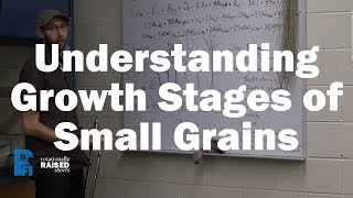 Understanding Growth Stages of Small Grains
