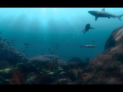 Sharks Play Critical Role in Ocean Food Web