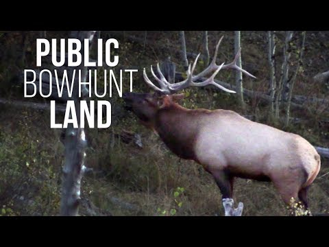 Bow Hunting Public Land Elk In September