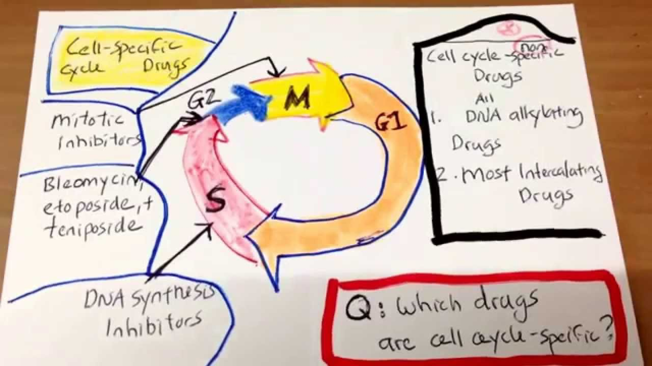 which cancer drugs are cell cycle specific