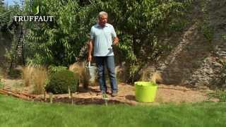 Comment et quand planter des iris ?