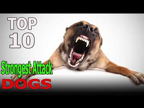 Top 10 Strongest attack dog breeds |Top 10 animals