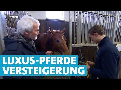 Die Luxus-Pferde von