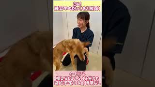 2020/06/28 オンライン譲渡会(広島譲渡センター) ~ピースワンコ・ジャパン~