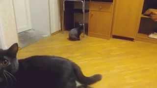 Не кошка, а собачка.