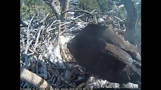Big Bear Eagles - Small fish, Big fish! - 2-13-18