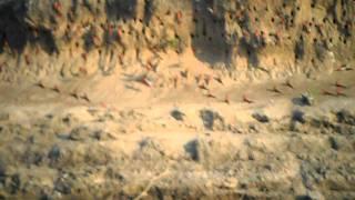 Carmine Bee-Eater Colony #1- Canoeing On The Zambezi- Mana Pools, Zimbabwe