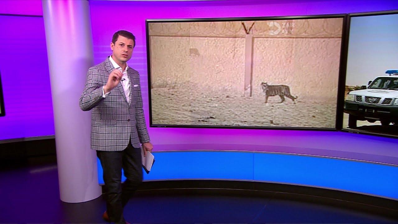 استياء الكثيرين في الجزائر بعد مقتل نمر هارب من حديقة حيوان والتنكيل به