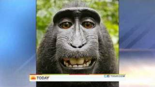 Monkey Steals Camera And Takes Self-Portrait Pics !