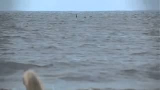 Skegness Monster