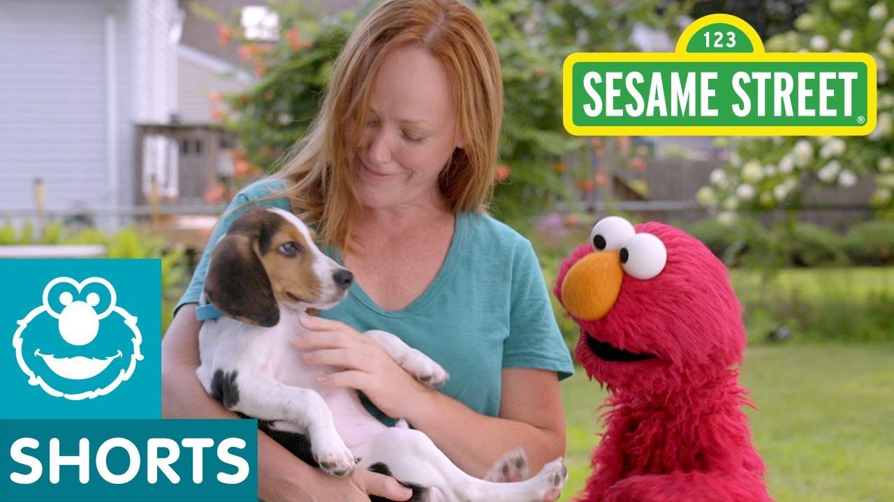 Sesame Street: Elmo Helps a Puppy Find a Home with Dodo Kids!