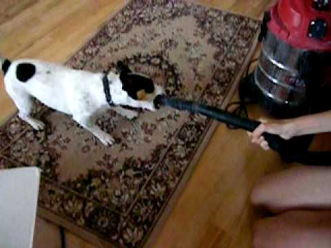 dog vs hoover