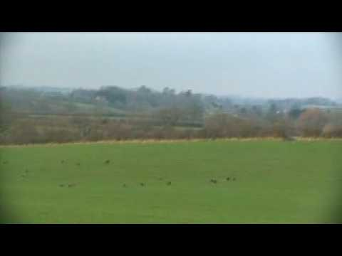 Hare Hunting Somerset 2009 -