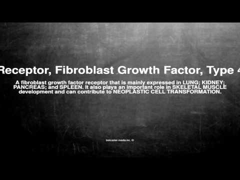 Medical vocabulary: What does Receptor, Fibroblast Growth Factor, Type 4 mean