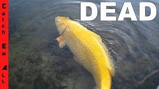 My friend KILLED MY NEW EXOTIC FISH!