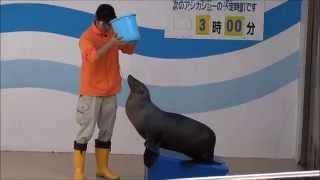 アシカ1頭なのにめちゃおもしろい!竹島水族館アシカショー