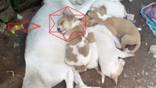 lovely Dog !! mom love his childs /Must Watch !!