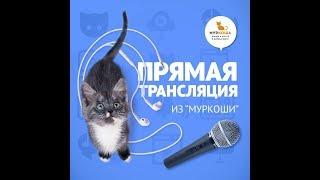 "В гостях у приюта ""Муркоша"" 17.07.2019"