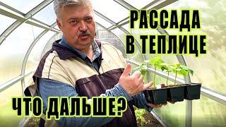 Пересадили рассаду овощей  в теплицу. Что дальше?