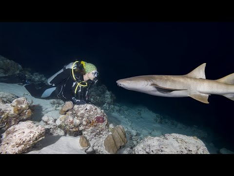 shark-diving-in-the-night