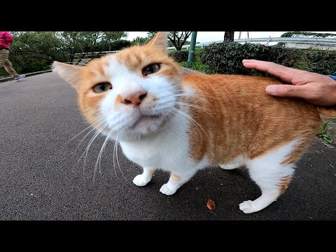 Chatty cat was waiting for me at the usual place to get snuggled from YouTube · Duration:  2 minutes 12 seconds