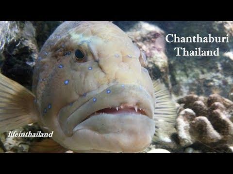 KKB Aquarium, Chanthaburi, Thailand, Tour, So many Fish.