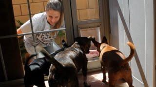 I Teach My Dogs How To Use A Doggy Door