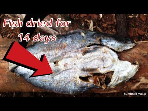 Weird foods | Dry fish cut after 14 days | Popular in coastal region