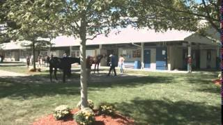 Baixar Preferred Equine at the Lexington Selected Yearling Sale
