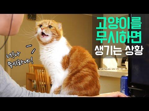 고양이 말을 무시하면 생기는 상황 - 노을이편-