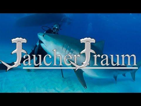 Tigerhai Tauchen auf den Bahamas - eine Sondertour von Tauchertraum