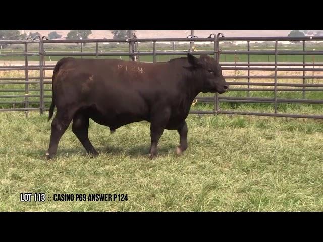 Dal Porto Livestock and Rancho Casino Lot 113