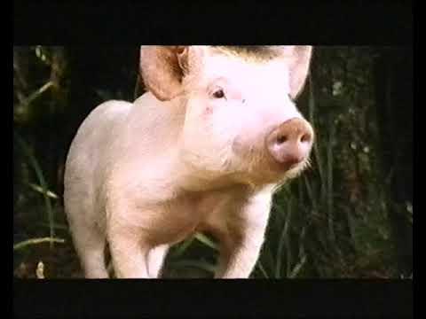 Ein Schweinchen Namens Babe Trailer