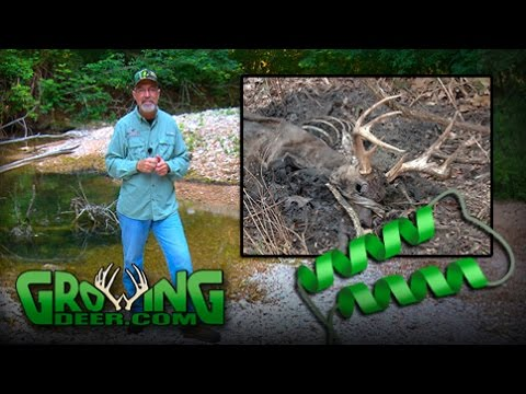 Explaining The Difference in Deer Diseases: EHD and CWD (#344) @GrowingDeer.tv