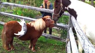 Cute And Funny Horse Videos Compilation Little Pony in Real Life   Soo Cute!