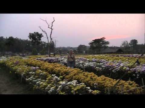 Huwelijk Michael en Sirirat (Thailand 14 febr 2012) deel 2 van 2