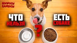 Топ запрещенных продуктов для собак! Это должен знать каждый!