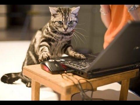 inteligencia de los gatos