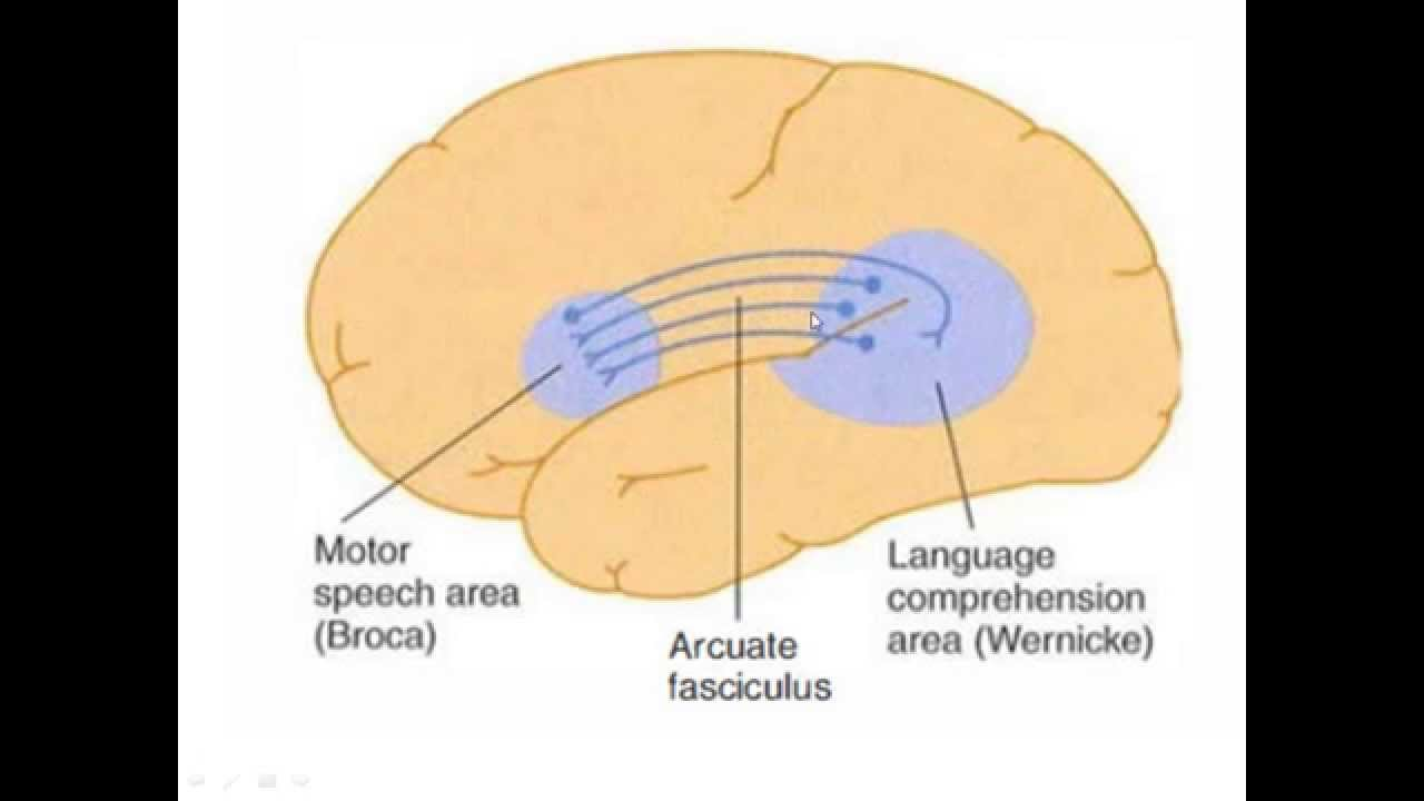 Broca S Aphasia And Wernicke S Aphasia Usmle High Yield